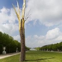 פסלי עץ מרשימים של ג'וזפה פנונה בורסאי