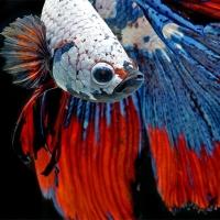 צילומי דגים מרהיבים ביופים