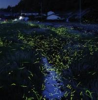 הצלם צוניקי הירמטסו היפני ב