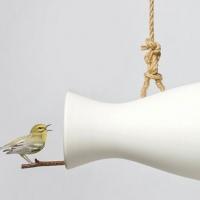 מגבר לטבע לכל אלו האוהבים את ציוץ הציפורים