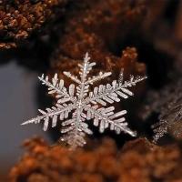 צילומי תקריב מרהיבים של פתיתי שלג