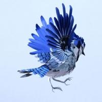 סידרה יפייפיה של ציפורים מנ